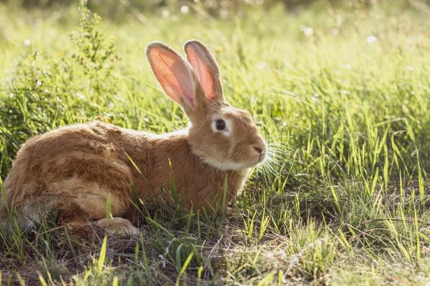 5 อันดับหญ้าแห้ง อาหารกระต่าย ราคาถูก คุณภาพดี